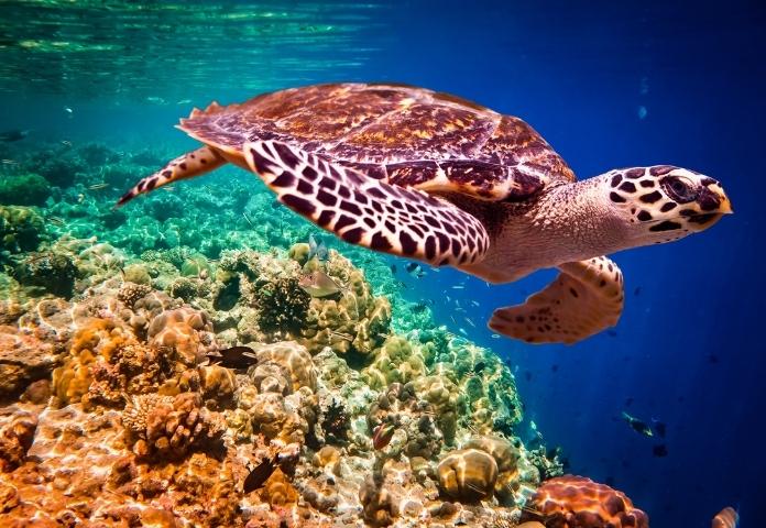 Female Names For Tortoises Beginning with 'T'