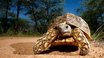 100+ Great Tortoise Names Starting With 'T'