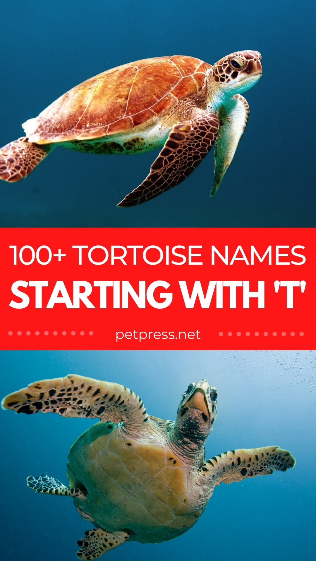 tortoise names starting with T