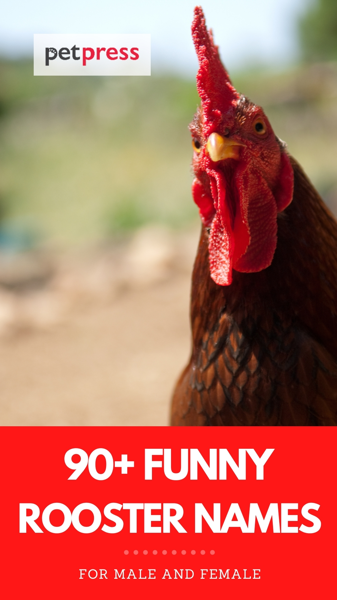 funny rooster names