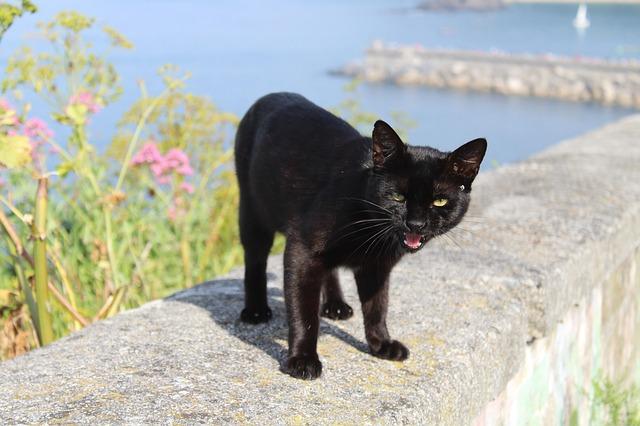 male-caribbean-cat-names