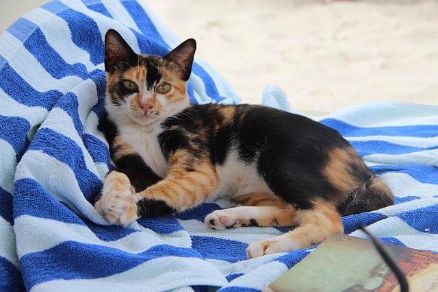 famous-caribbean-cat-names