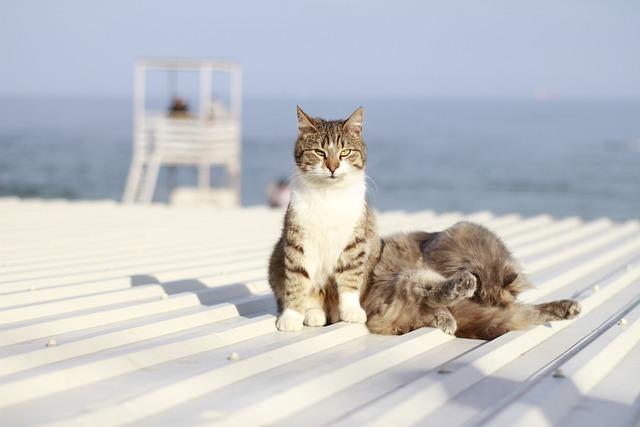 unique-caribbean-cat-names