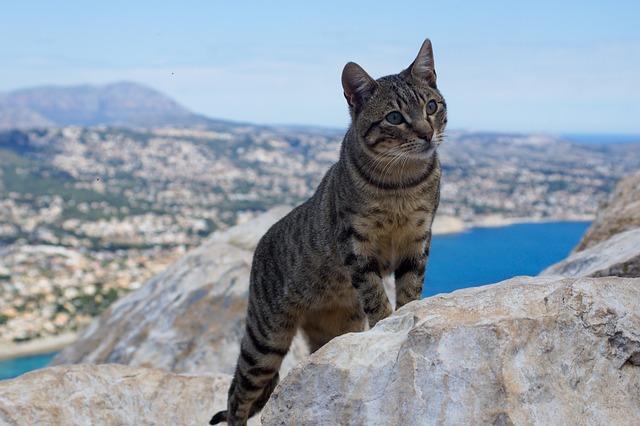 unique-tropical-cat-names