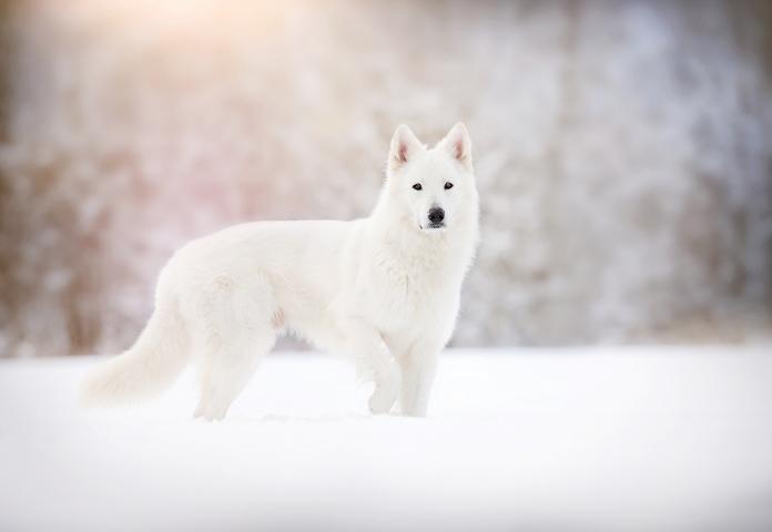 Female White Wolf Names