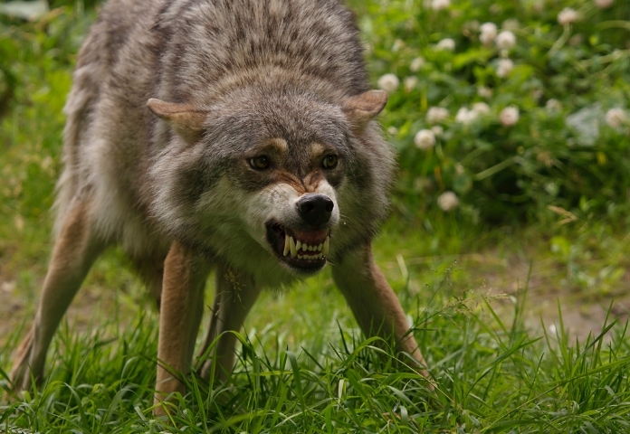 Unisex Demon Wolf Names