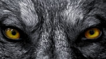 130+ Demon Wolf Names and Their Meanings