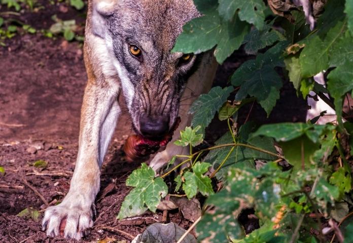 Female Demon Wolf Names