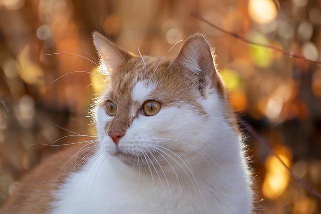 male-nordic-cat-names