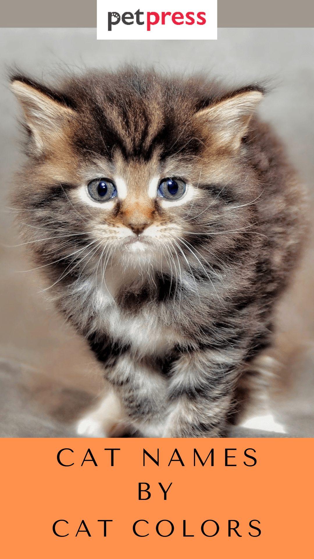 cat-names-by-cat-colors