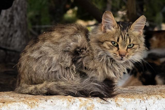 brown-cat-names