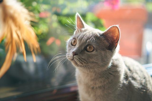 grey-cat-names