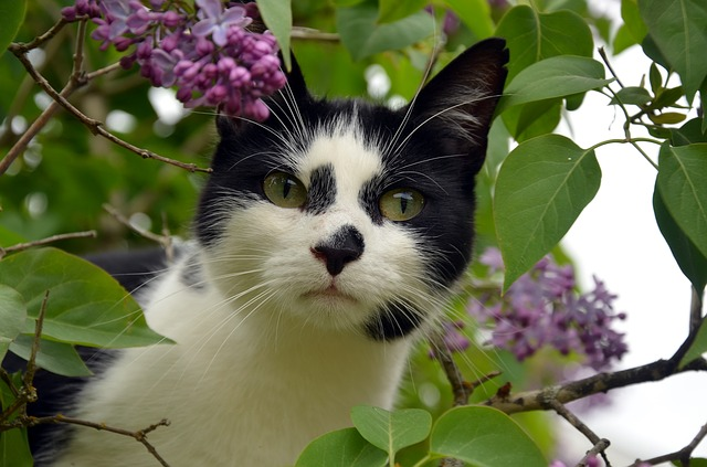 black-and-white-cat-names