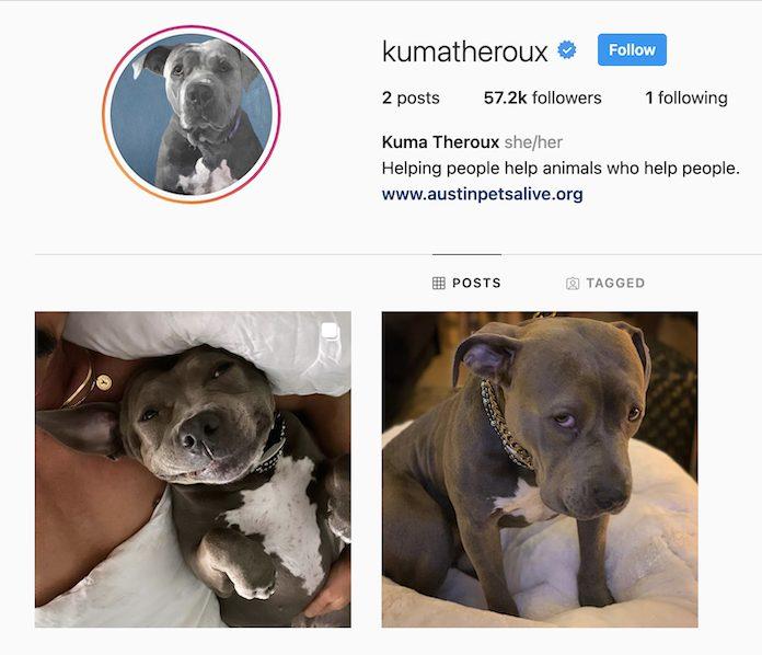 Kuma's instagram page