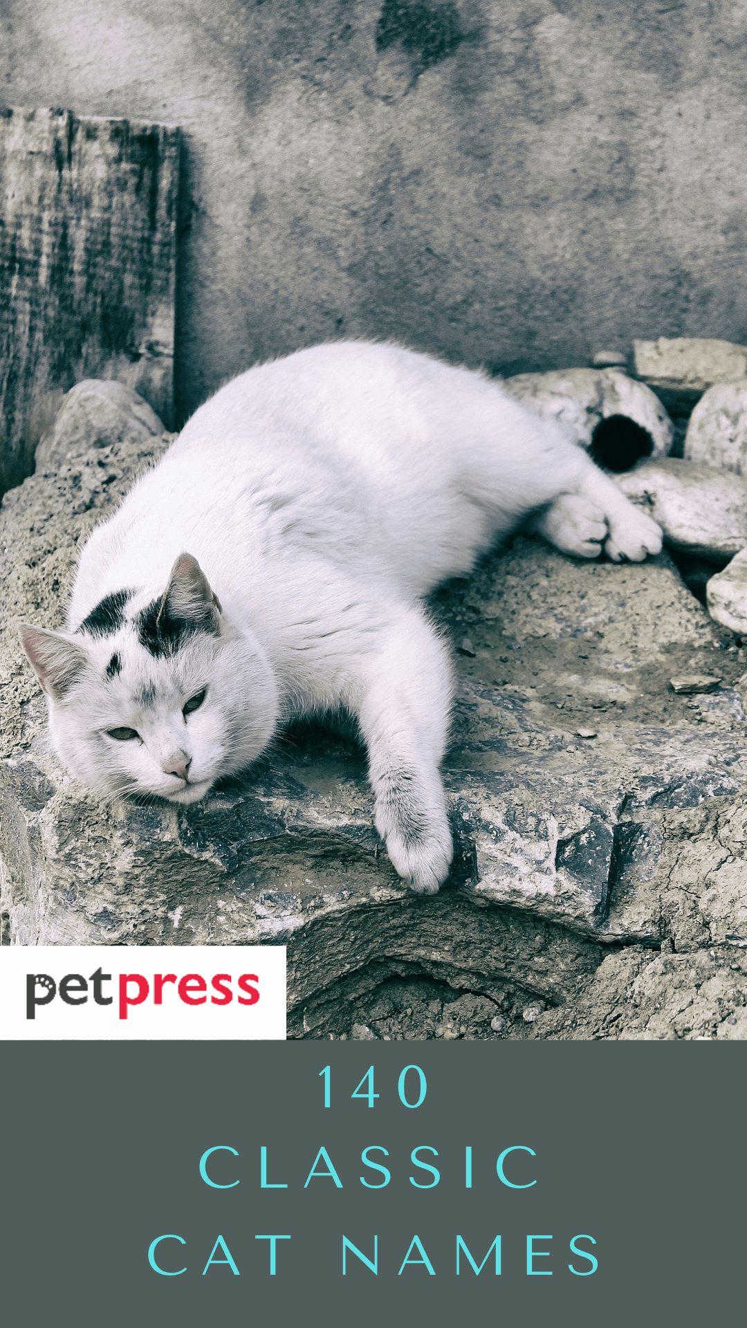 classic-cat-names