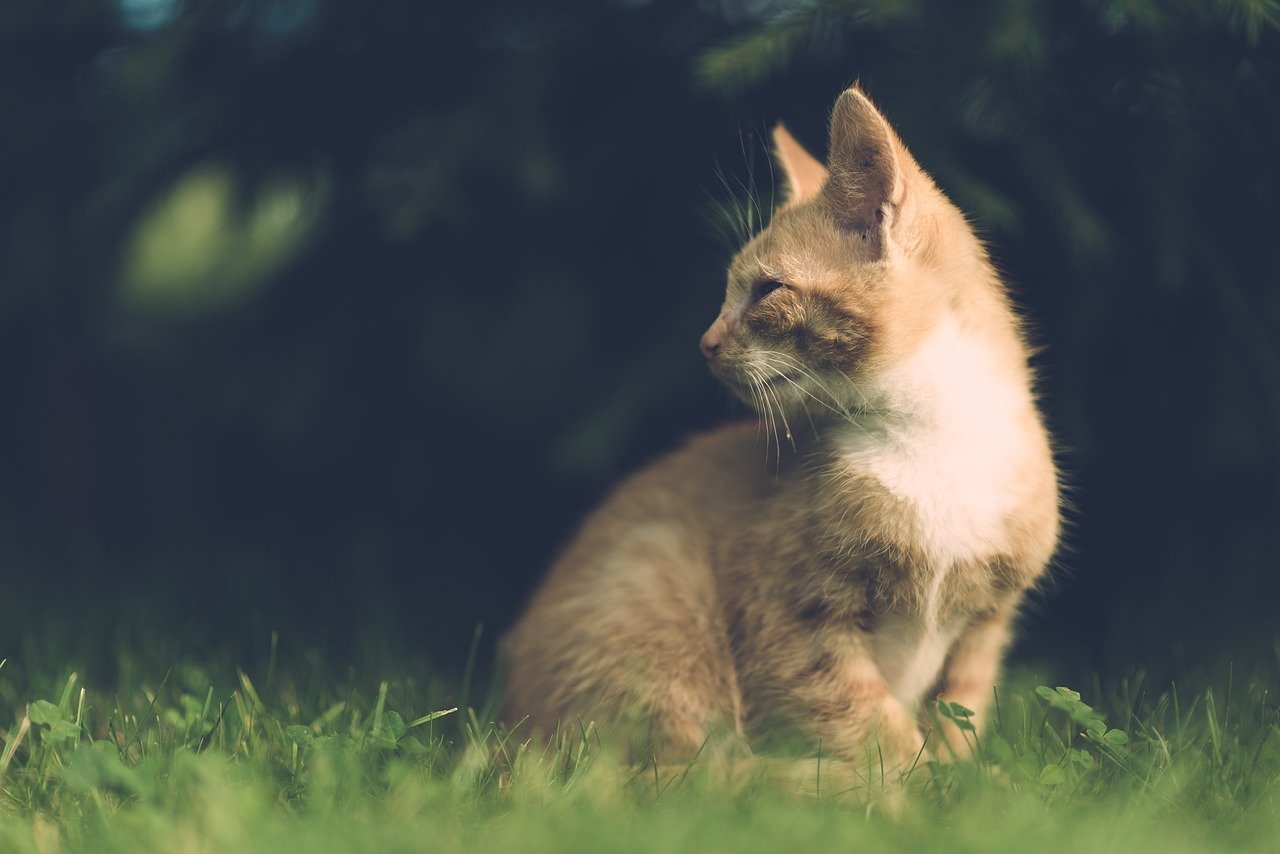 famous-classic-cat-names
