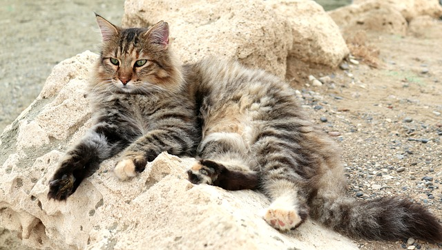 male-human-names-for-cats