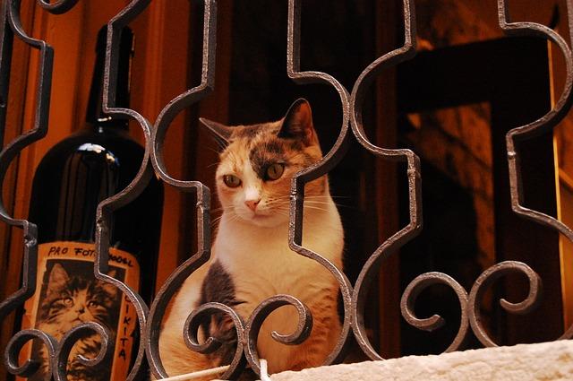 wine-cat-names