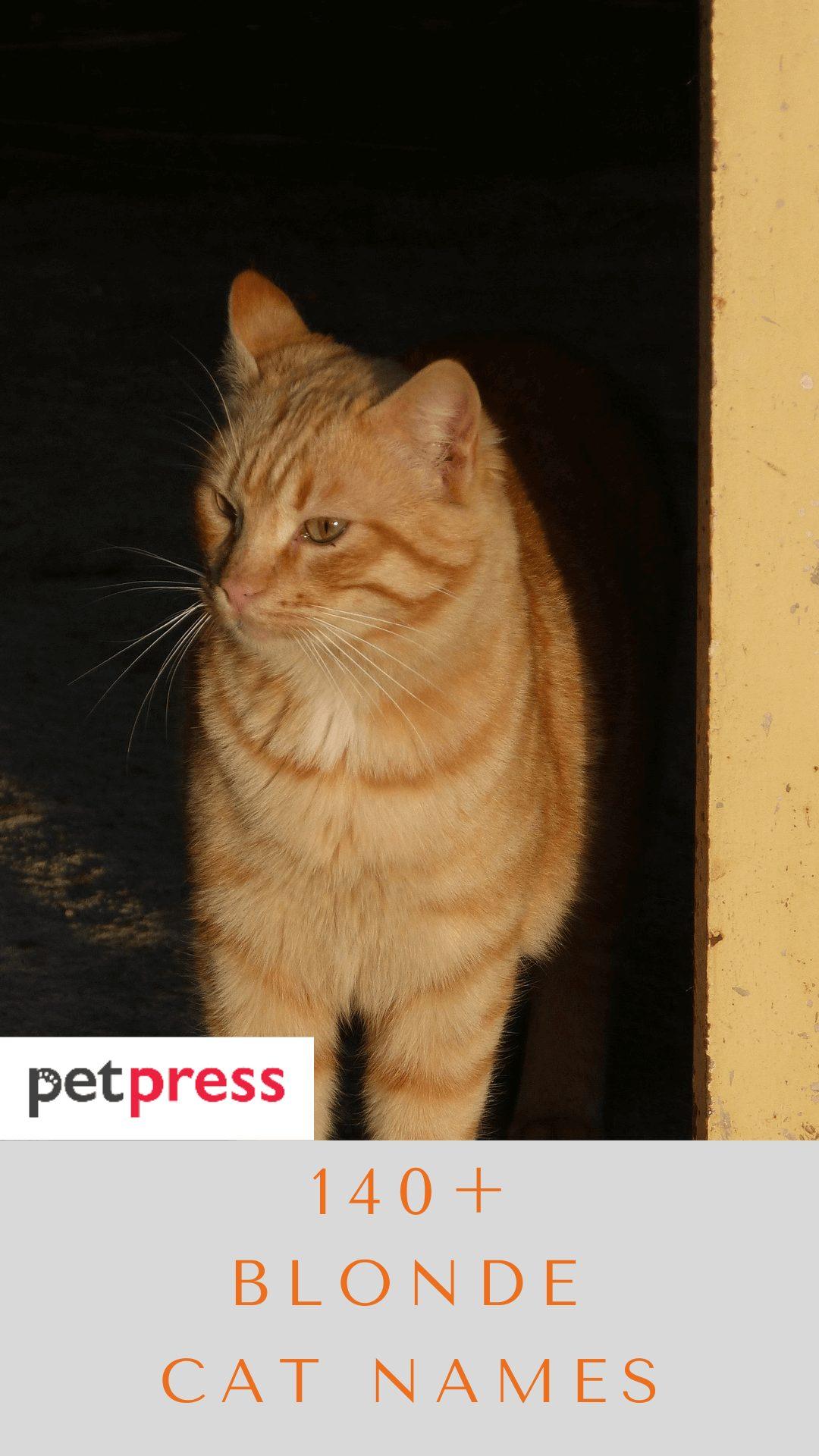 blonde-cat-names