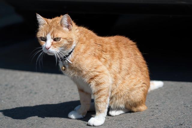 male-blonde-cat-names
