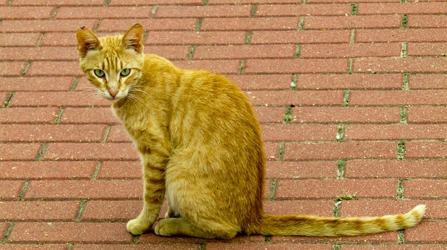 female-blonde-cat-names