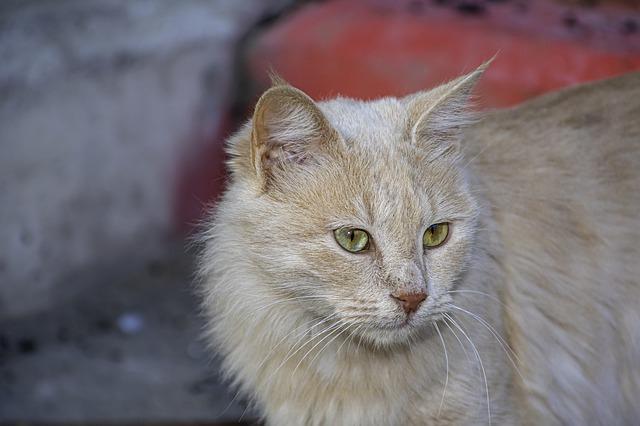 famous-blonde-cat-names