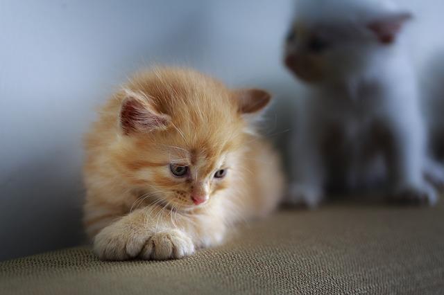 unique-blonde-cat-names