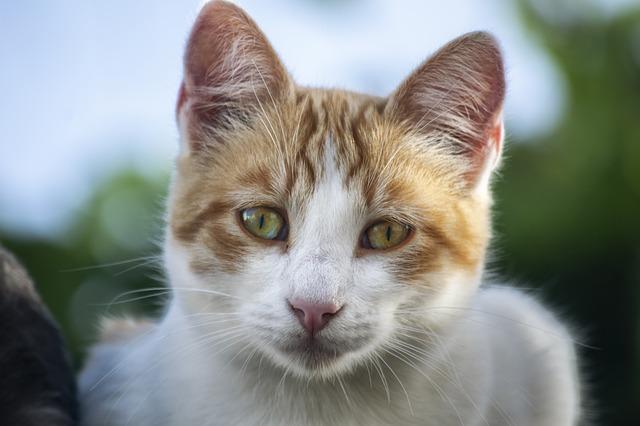 turkish-cat-names