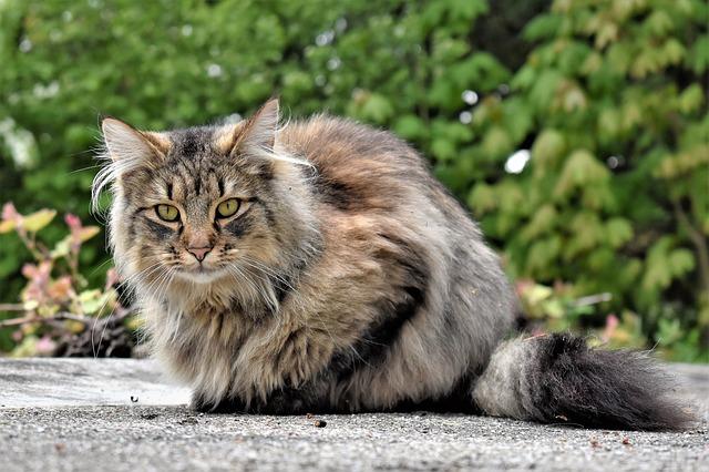 arabic-persian-cat-names