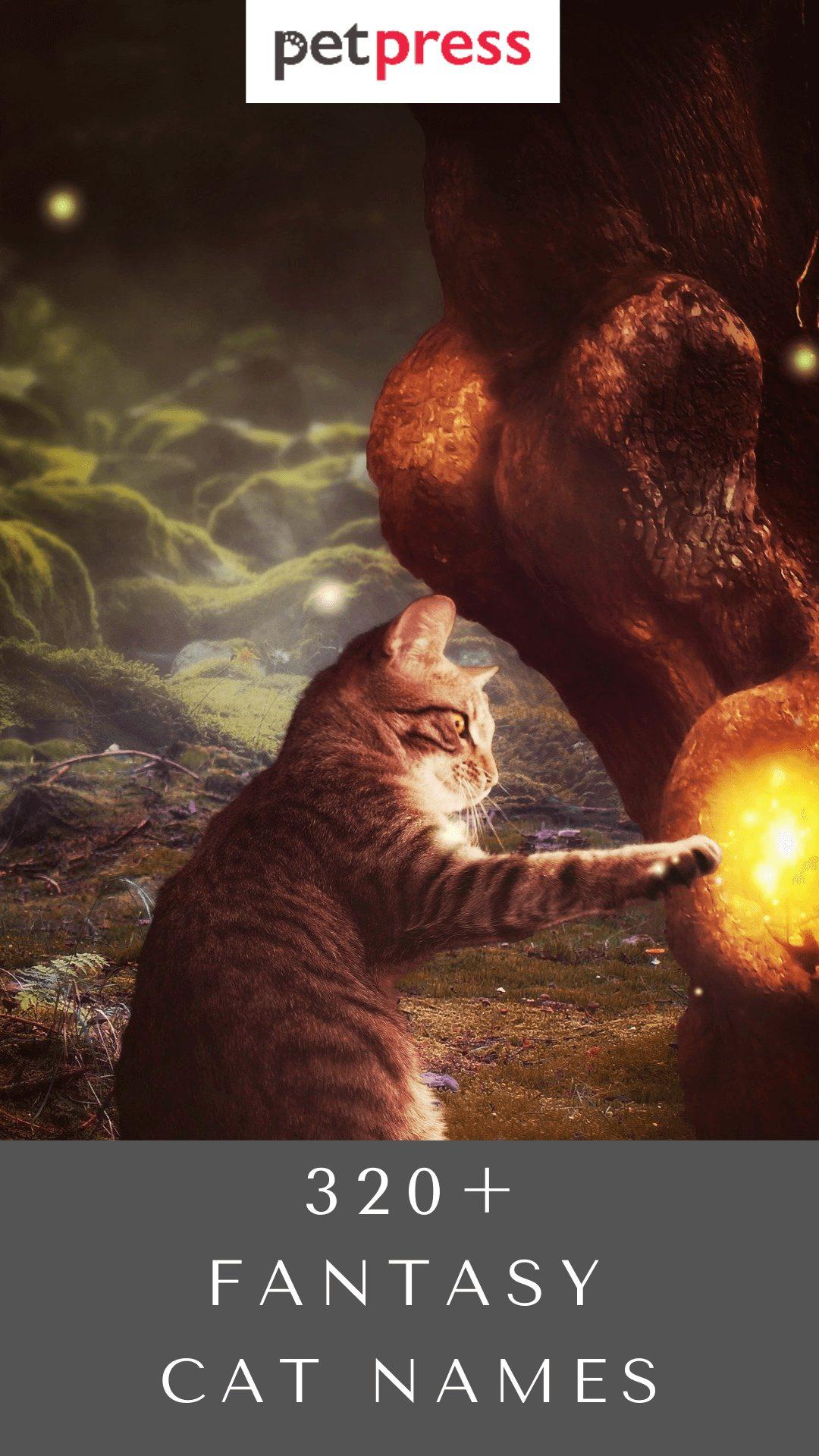fantasy-cat-names