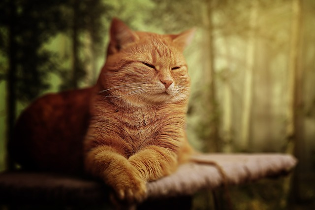 male-fantasy-cat-names