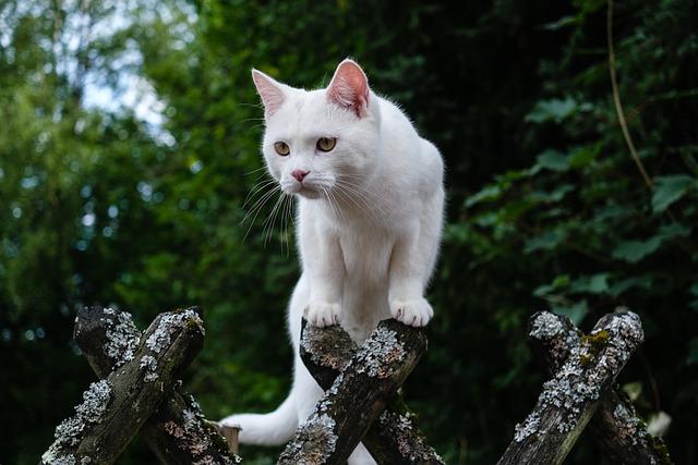 top-fantasy-cat-names