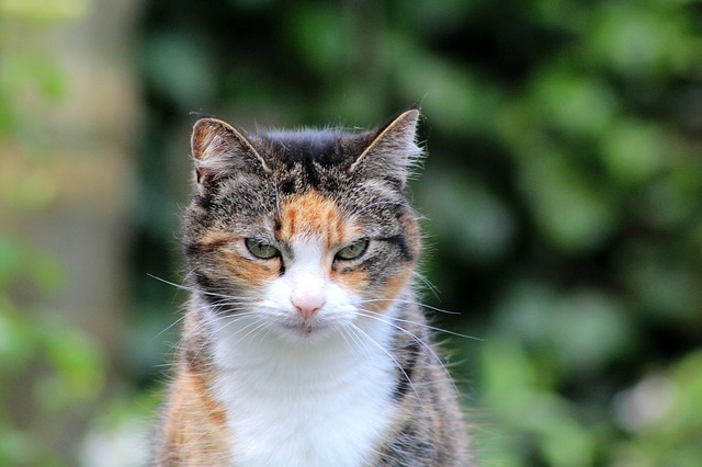 old-fashioned-female-cat-names