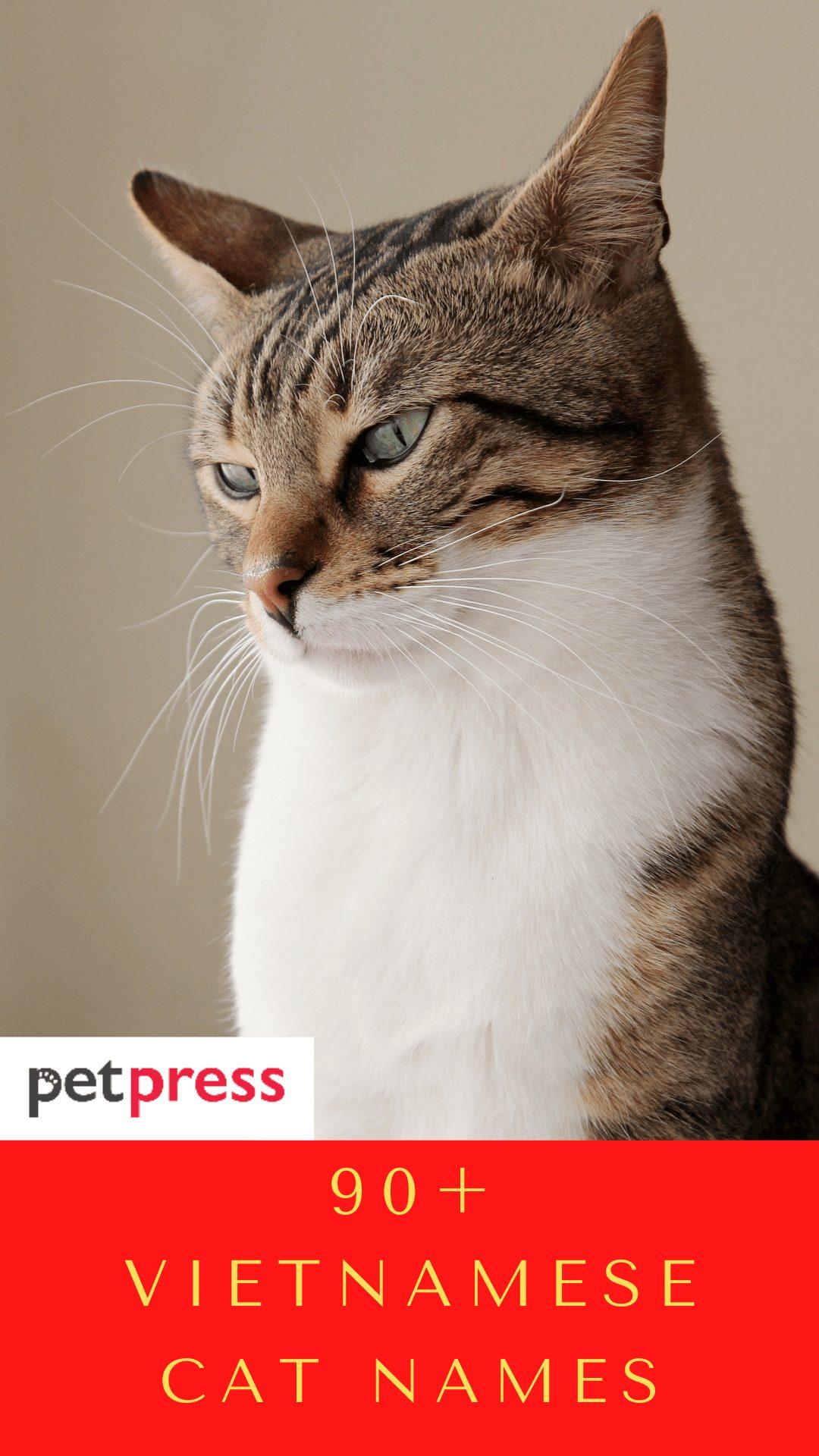 vietnamese-cat-names