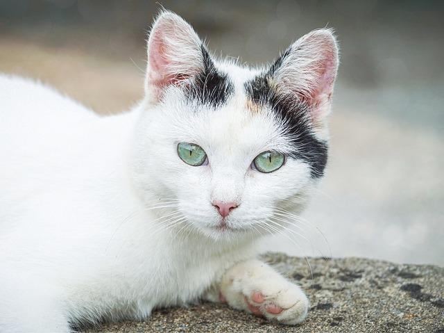 female-vietnamese-cat-names
