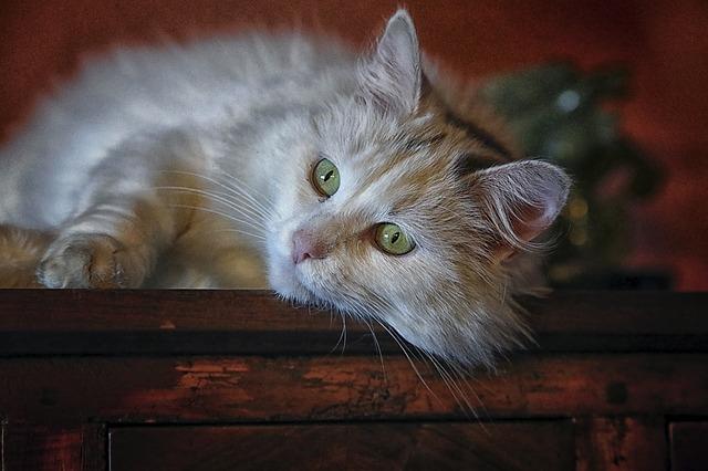 unisex-vietnamese-cat-names