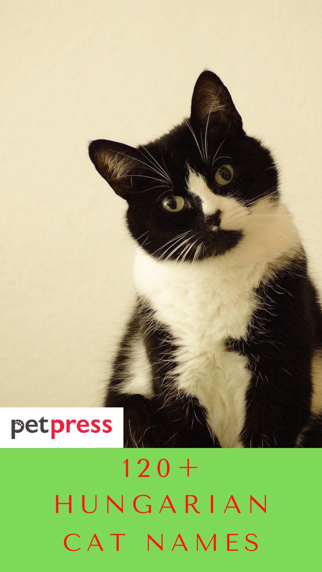 hungarian-cat-names