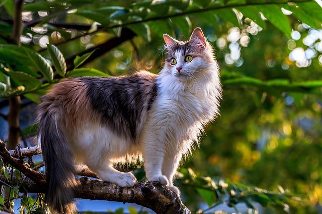 male-hungarian-cat-names