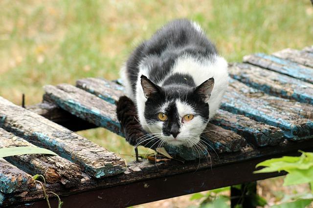 female-hungarian-cat-names
