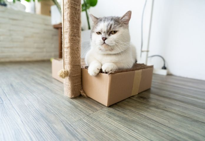 The Munchkin Cat is Considered Controversial By Vets