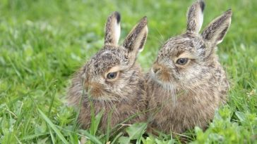 Top Rabbit Pair Names - List of 100+ for a Pair of Rabbits