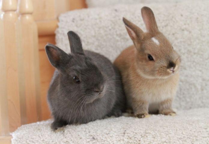 Famous Rabbit Pair Names