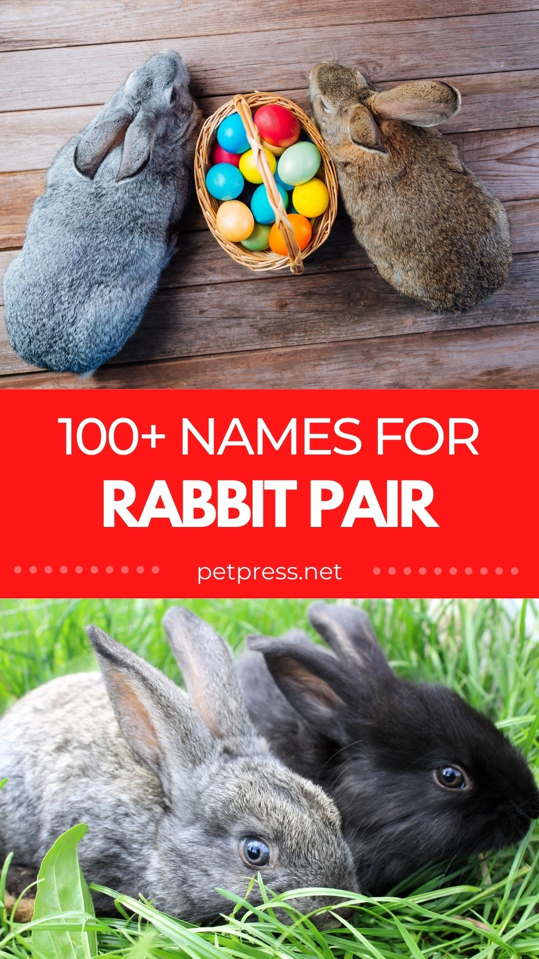 rabbit pair names