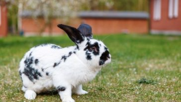 Best Giant Rabbit Names - Over 100+ Name Ideas for Giants Bunnies
