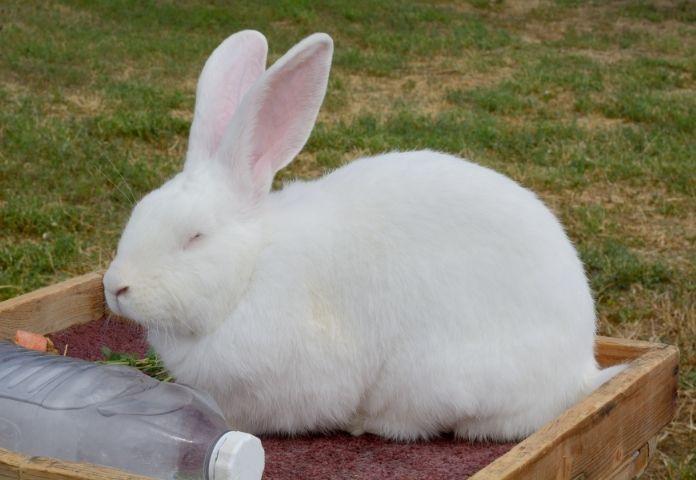Male Giant Rabbit Names