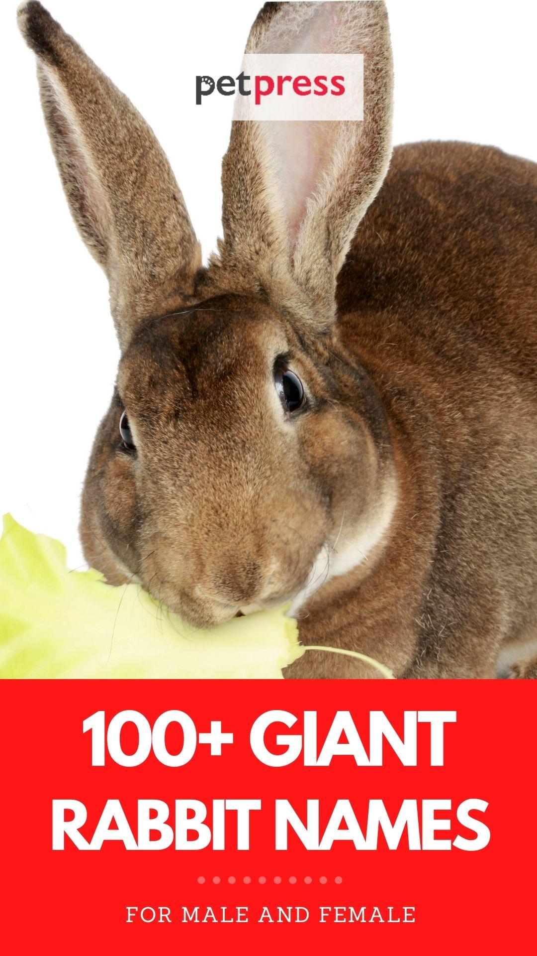 giant rabbit names