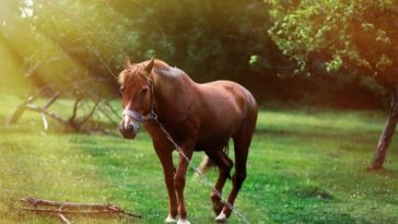 100+ Nature-inspired Horse Names for Your Male or Female Horse