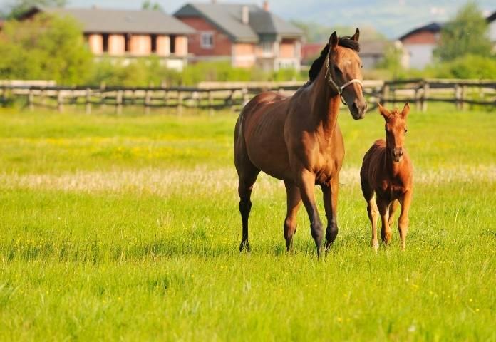 Female Nature-inspired Horse Names