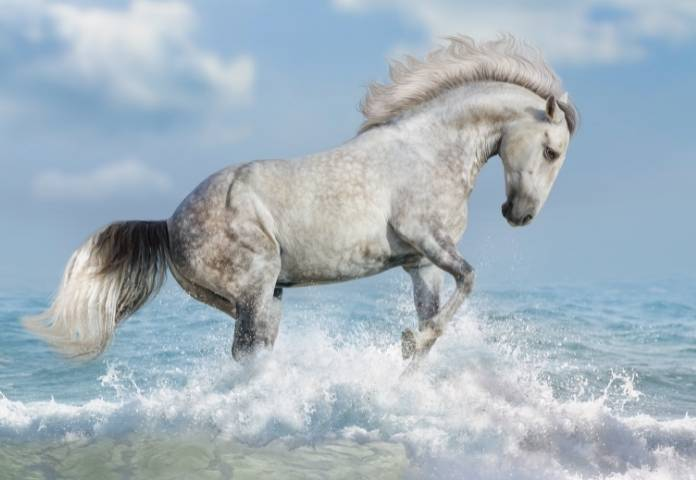 Native American Horse Names Inspired By Nature