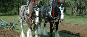 Best Shire Horse Names